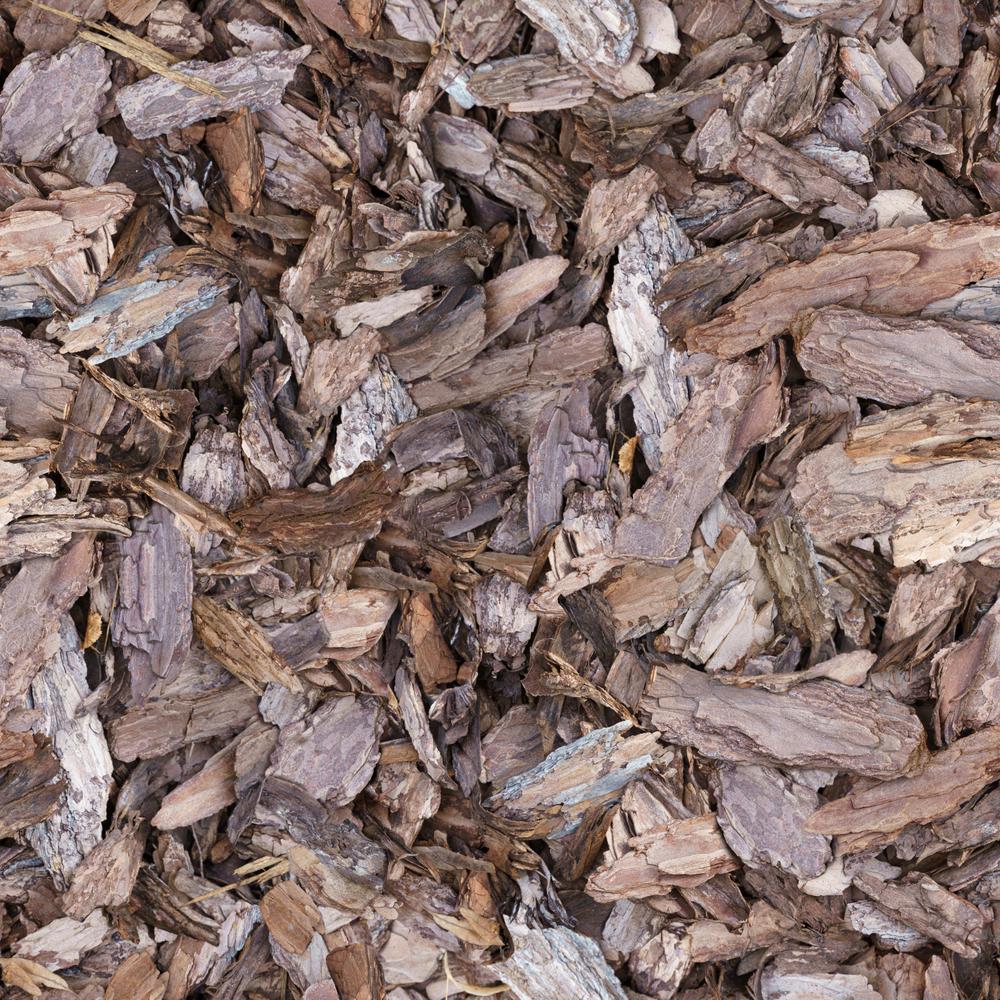 bark texture background